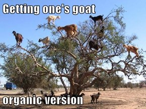 Getting one's goat  organic version
