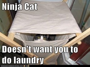 Ninja Cat  Doesn't want you to do laundry