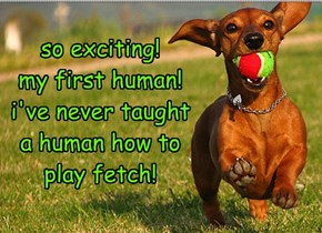 so exciting! my first human! i've never taught a human how to play fetch!