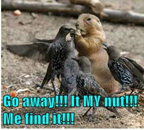 Go away!!! It MY nut!!! Me find it!!!