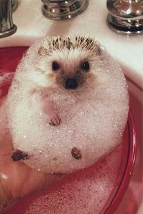 Everybody Loves a Good Bubble Bath!