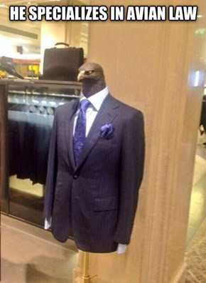This Suit is as Sharp as an Eagle's Beak!