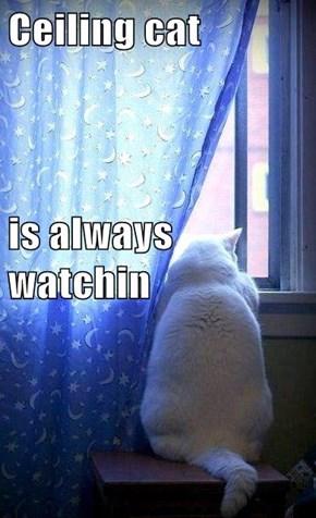 Ceiling cat is always watchin