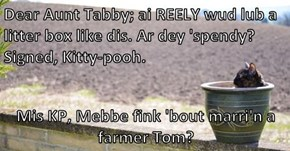 Dear Aunt Tabby; ai REELY wud lub a litter box like dis. Ar dey 'spendy?  Signed, Kitty-pooh.  Mis KP, Mebbe fink 'bout marri'n a farmer Tom?