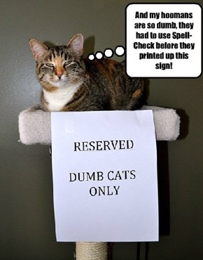 Beware of making fun of cats: they hold grudges!