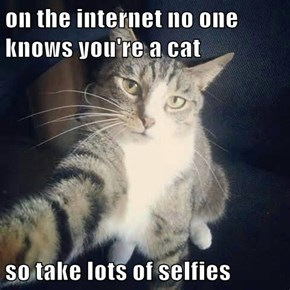 on the internet no one knows you're a cat  so take lots of selfies