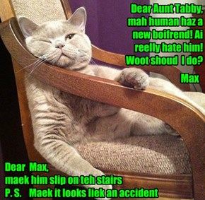 Dear Aunt Tabby, mah human haz a new boifrend! Ai reelly hate him!  Woot shoud  I do?