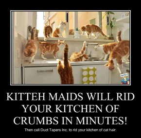 KITTEH MAIDS WILL RID YOUR KITCHEN OF CRUMBS IN MINUTES!