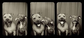 Something Special Happens When You Put Dogs in a Photobooth