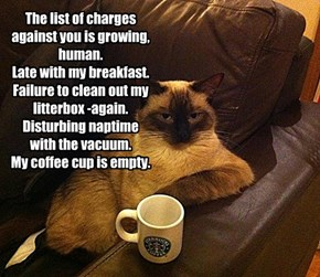 The list of charges against you is growing, human. Late with my breakfast. Failure to clean out my litterbox -again. Disturbing naptime with the vacuum. My coffee cup is empty.