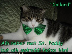 """Collard""  Aih neber met St. Paddy but aih awlreddi hates him!"
