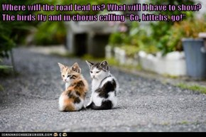 "Where will the road lead us? What will it have to show? The birds fly and in chorus calling ""Go, kittehs, go!"""