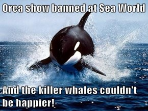 Orca show banned at Sea World  And the killer whales couldn't be happier!