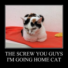 THE SCREW YOU GUYS I'M GOING HOME CAT