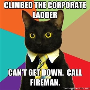 Business Cat problems