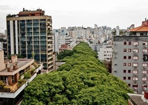 On This Street in Brazil, Man and Nature Are in Harmony