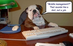 """Middle management?""  That sounds like a diet, not a job."