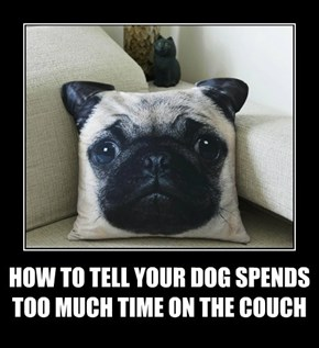 HOW TO TELL YOUR DOG SPENDS TOO MUCH TIME ON THE COUCH