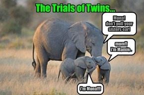 The Trials of Twins...