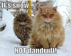 It's snow...  NOT dandruff!