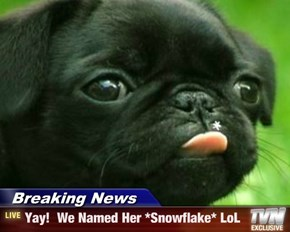 Breaking News - Yay!  We Named Her *Snowflake* LoL