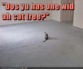 """Dos yu has one wid ah cat tree?"""