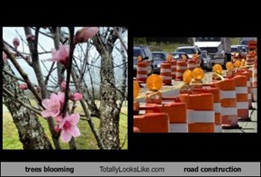 trees blooming Totally Looks Like road construction