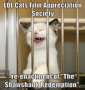 "LOL Cats Film Appreciation Society  re-enactment of ""The Shawshank Redemption""."