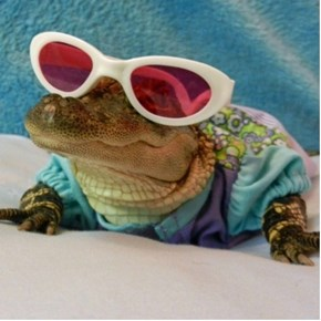 Animals in Sunglasses Are Always Amusing