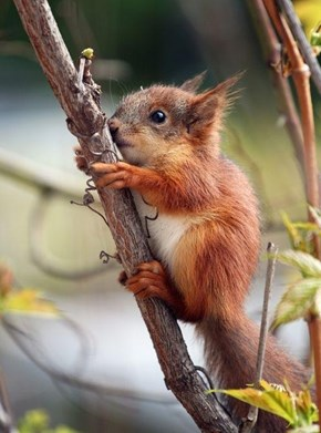 Baby Squirrel With the Cuteness!