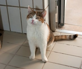 Beautiful Tricolor Cat Ginger