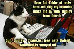 Deer  Ant  Tabby,  ai  srsly  hate  teh  dog  my  hoomins make  me  liv  with.  Dudley frum  Detroit.