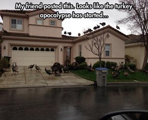 Turkey Day Becomes the New Dooms Day