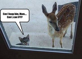 He said his name was Bambi