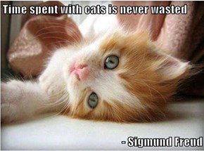 Time spent with cats is never wasted  - Sigmund Freud