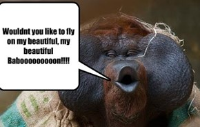 Your an Orangutan!