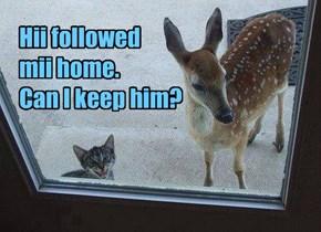 Hii followed mii home. Can I keep him?