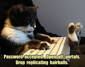 Hacker kitty hacks