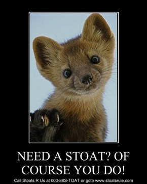 NEED A STOAT? OF COURSE YOU DO!