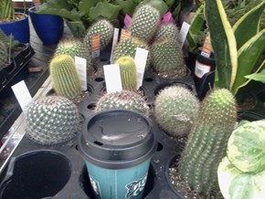 Just us Cacti...