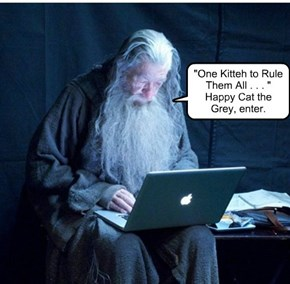 """One Kitteh to Rule Them All . . . "" Happy Cat the Grey, enter."
