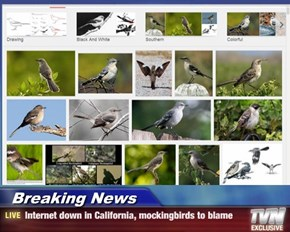 Breaking News - Internet down in California, mockingbirds to blame