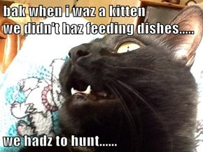 bak when i waz a kitten                          we didn't haz feeding dishes.....  we hadz to hunt......