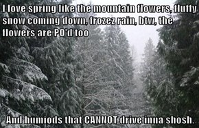 I love spring like the mountain flowers, fluffy snow coming down, frozez rain, btw, the flowers are PO'd too  And humiods that CANNOT drive inna shosh.