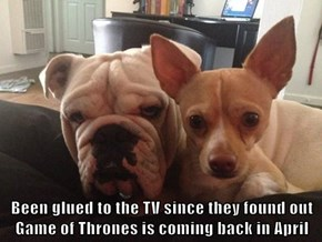 Been glued to the TV since they found out Game of Thrones is coming back in April