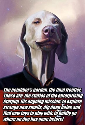 The neighbor's garden, the final frontier.  These are  the stories of the enterprising Starpup. His ongoing mission: to explore strange new smells, dig deep holes and find new toys to play with, to boldly go where no dog has gone before!