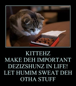 KITTEHZ  MAKE DEH IMPORTANT DEZIZSHUNZ IN LIFE! LET HUMIM SWEAT DEH OTHA STUFF
