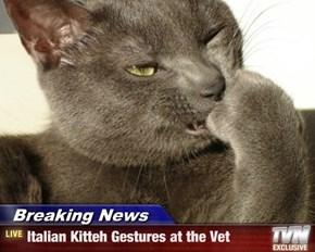 Breaking News - Italian Kitteh Gestures at the Vet