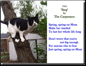 """Spring"" (TTO ""Sing"" by The Carpenters)"