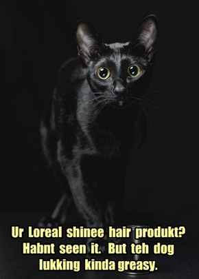 Ur  Loreal  shinee  hair  produkt?  Habnt  seen  it.   But  teh  dog  lukking  kinda greasy.